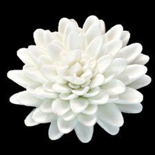 Chrysanthemum - Large - White Only 18 Count