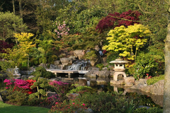 Find serenity at the Kyoto Garden, Holland Park