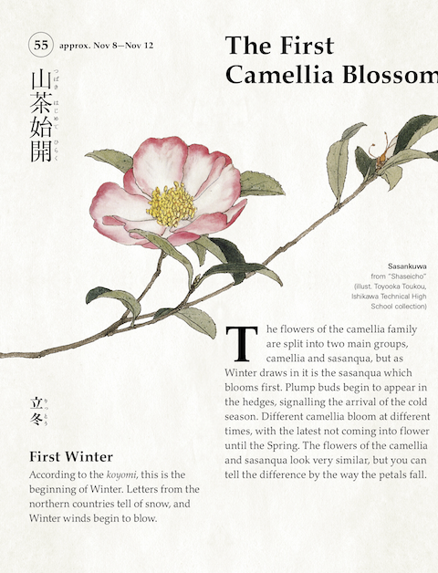 72 Seasons - First camellia blosson