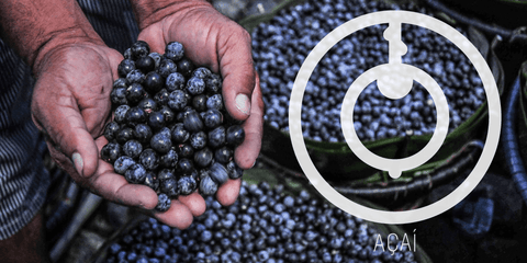 Açaí, The Beauty Berry - A Brazilian Superfruit Gone Global