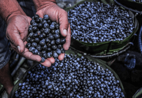Açaí, The Beauty Berry - The Well-Known and Loved Brazilian Superfruit