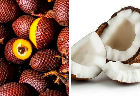 Buriti Oil vs. Coconut Oil