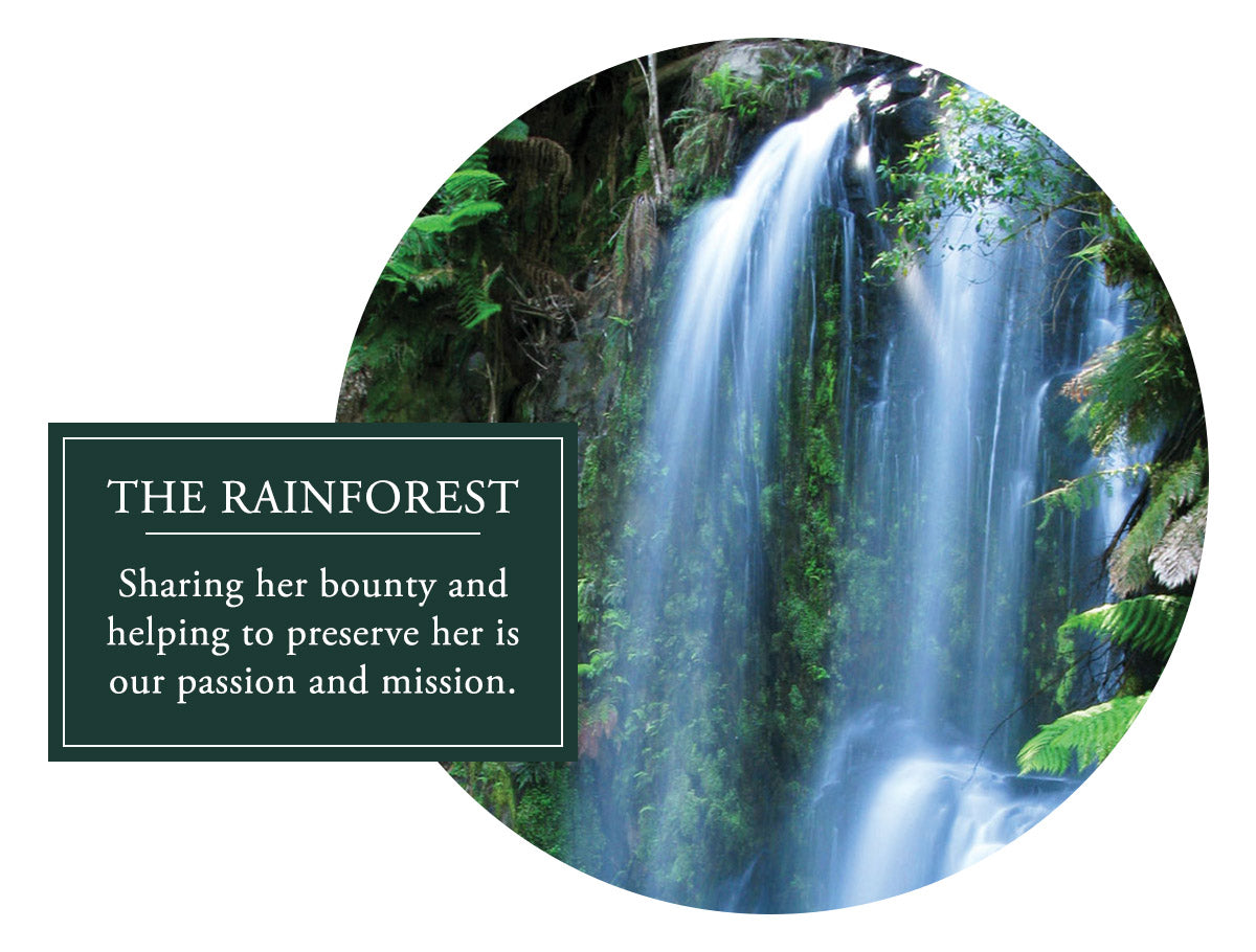 The Rainforest - Sharing her bounty and helping to preserve her is our passion and mission.