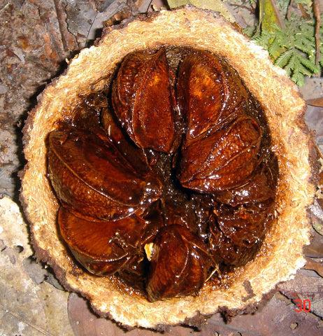 halved brazil nut seed, with individual unpeeled brazil nuts inside