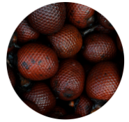 buriti fruits