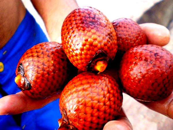 person holding buriti fruit