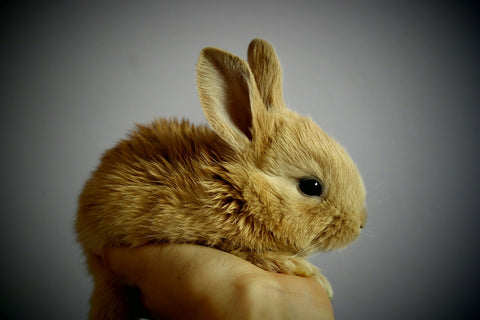 person holding small yellow bunny