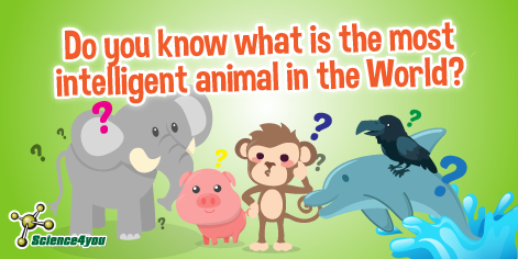Do you know what is the most intelligent animal in the World?