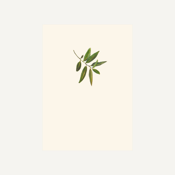 BOX SET OF SIX OLIVE SPRIG CARDS