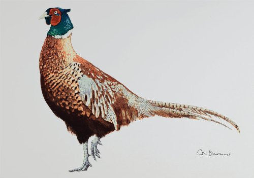 Cock pheasant greeting card by Colin Blanchard