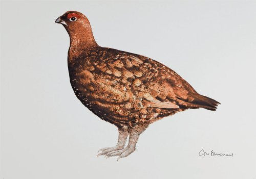 Grouse greeting card by Colin Blanchard