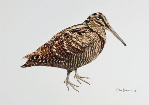 Woodcock greeting card by Colin Blanchard