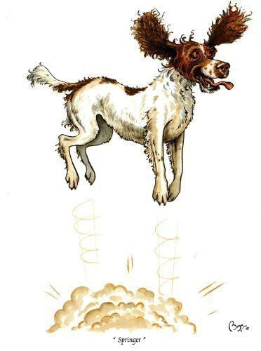 Springer Spaniel Dog Greeting Card by Bryn Parry