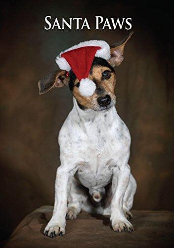 Jack Russell Dog Christmas Card by Charles Sainsbury-Plaice. Large A5 size with envelope.