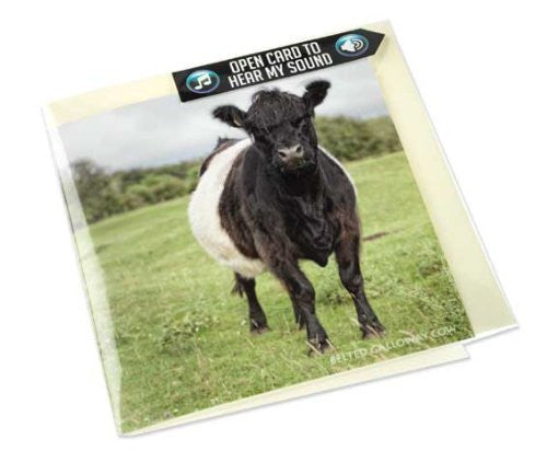 Belted Galloway Cow Greeting Card with sound