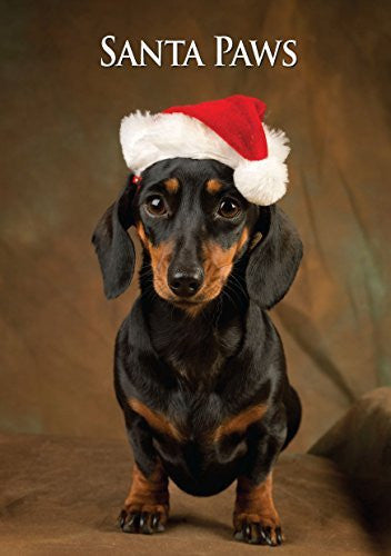 Miniature Dachshund Dog Christmas Card by Charles Sainsbury-Plaice. Large A5 size with envelope.