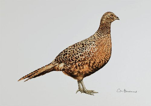 Hen pheasant greeting card by Colin Blanchard.