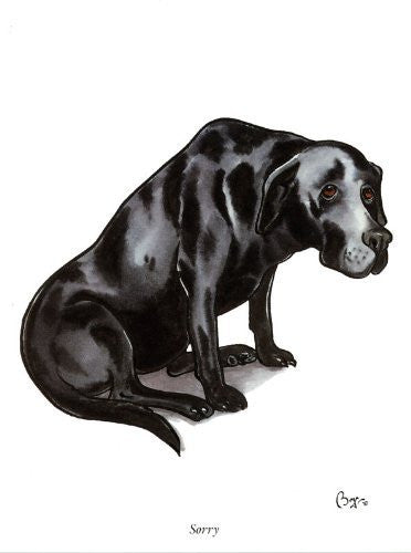 Black Labrador greeting card. Sorry by Bryn Parry