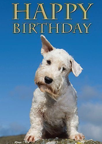 Sealyham Terrier Dog Greeting Card by Charles Sainsbury-Plaice