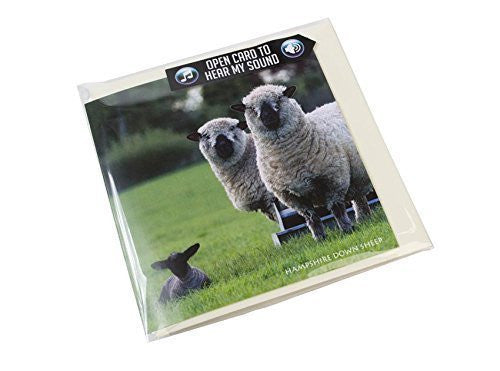 Hampshire Down Sheep Greeting Card with sound