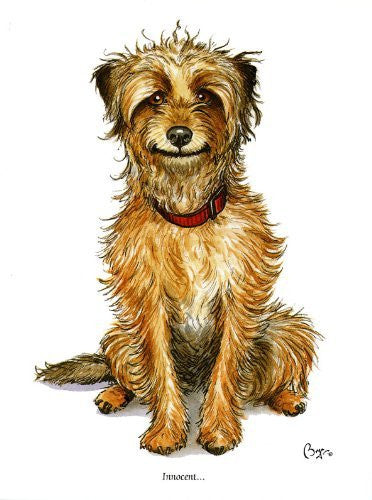 """Innocent"" Dog greeting card by Bryn Parry. Iconic cartoon image of small hairy fellow. Blank on the inside for lots of words and any occasion."