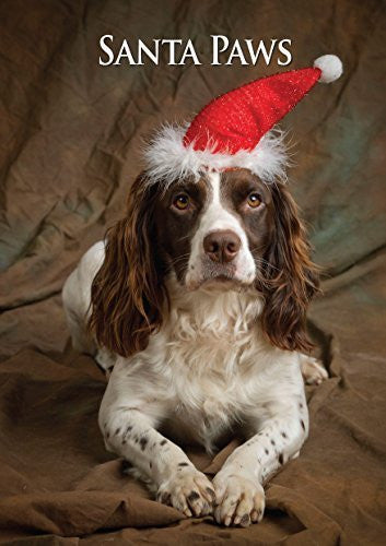 Working Springer Spaniel Dog Christmas Card by Charles Sainsbury-Plaice. Large A5 size with envelope.