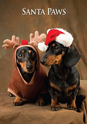 Miniature Dachshunds Dog Christmas Card by Charles Sainsbury-Plaice. Large A5 size with envelope.