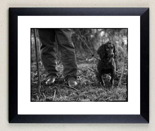 """Cocker trial"" signed limited edition photographic cocker spaniel dog print by Charles Sainsbury-Plaice"