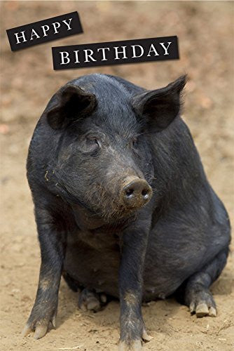 Large Black Pig Birthday Greeting Card. Large A5 size with envelope. Blank on the inside for all occasions