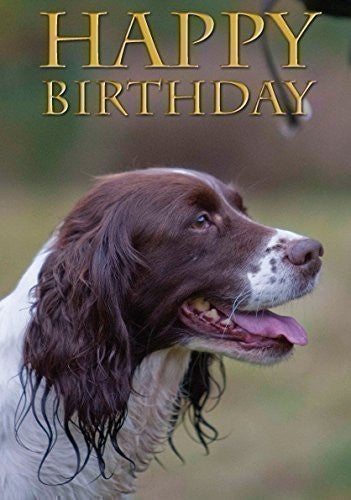 Springer Spaniel dog Birthday Card. Perfect for people who like springers, shooting and field sports. By Charles Sainsbury-Plaice