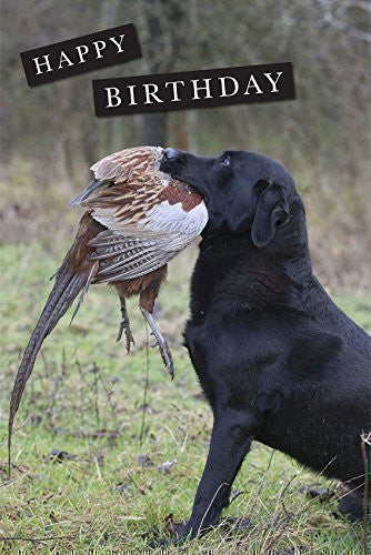 Black Labrador with pheasant Birthday Greeting Card. Large A5 size with envelope. Blank on the inside.