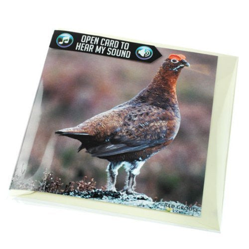 Grouse greeting card with sound. Plays real grouse noise when opened. Perfect to go with shooting gift