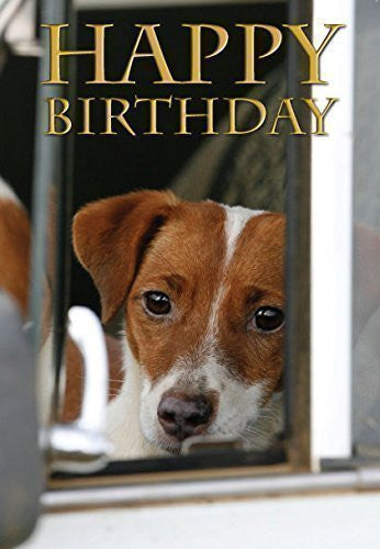 Jack Russell terrier photographic birthday card for dog lovers. By Charles Sainsbury-Plaice. Large A5 size with envelope. Cellophane wrapped. Perfect for him or her