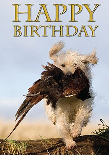 Labradoodle retrieving pheasant photographic birthday card for dog lovers. By Charles Sainsbury-Plaice. Large A5 size with envelope. Cellophane wrapped. Shooting and gun dog themed card.