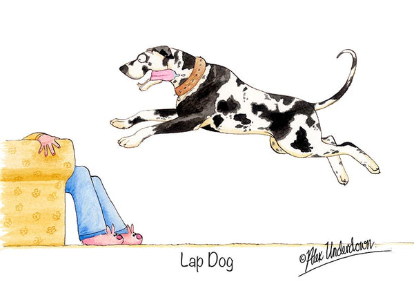 "Dog greeting card ""Lap Dog"" by Alex Underdown."