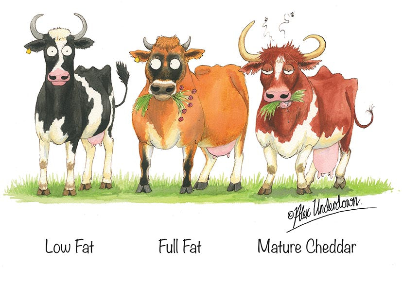 "Dairy cattle greeting card ""Low Fat, Full Fat, Mature Cheddar"" by Alex Underdown."