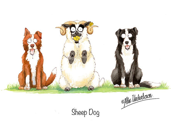 "Sheep Dog greeting card ""Sheep Dog"" by Alex Underdown."