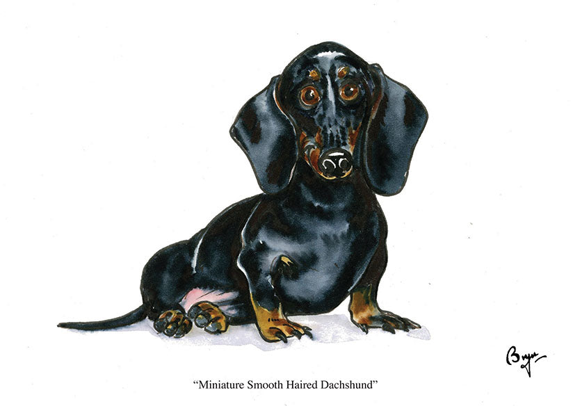 Smooth Haired Miniature Dachshund dog greeting card by Bryn Parry