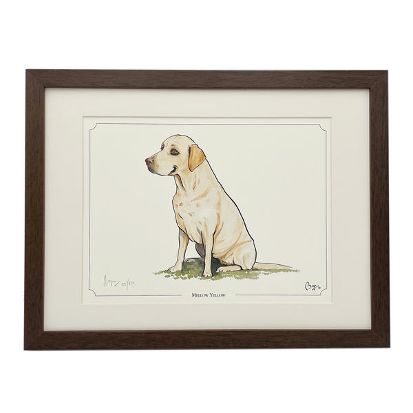 Mellow Yellow Labrador dog framed  limited edition print by Bryn Parry