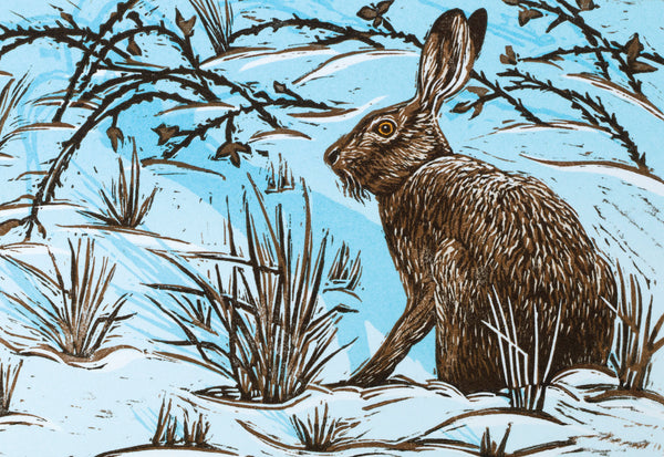 """Christmas Hare"" wildlife greeting card by Colin Blanchard."