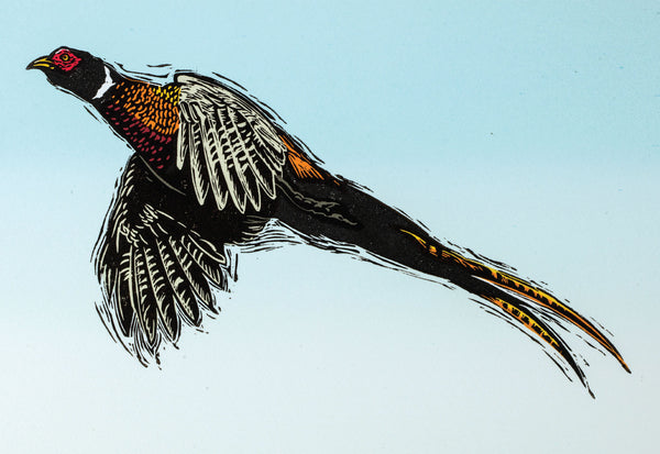 Pheasant greeting card. Climbing high by Colin Blanchard