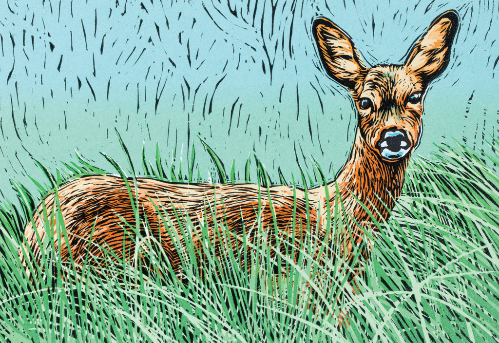 """Tina's Doe"" wildlife greeting card by Colin Blanchard."