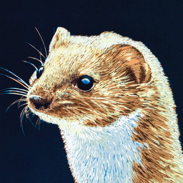 """Weasel"" wildlife greeting card by Colin Blanchard."