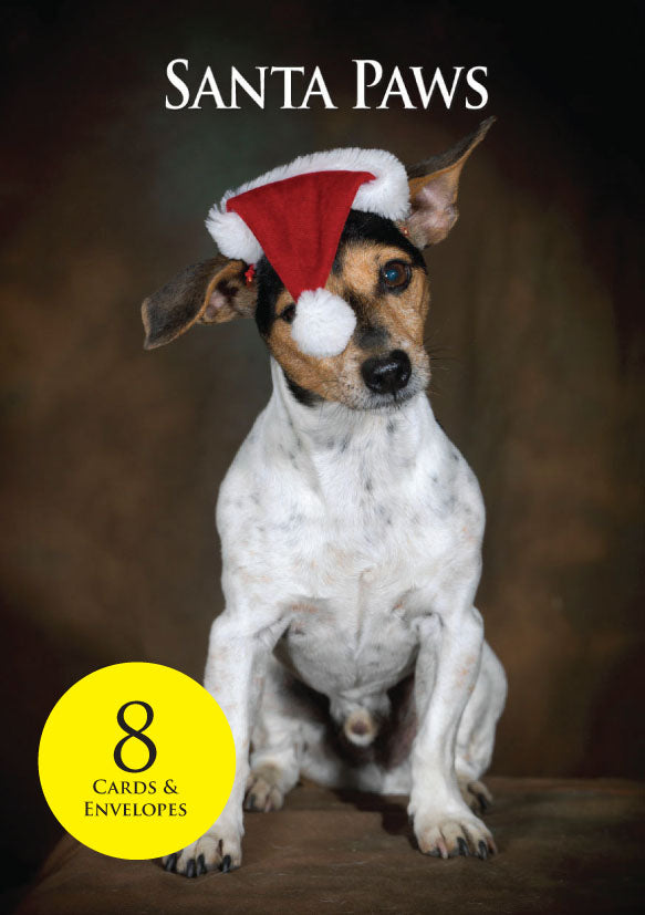 Jack Russell Terrier Dog Christmas Cards & envelopes by Charles Sainsbury-Plaice