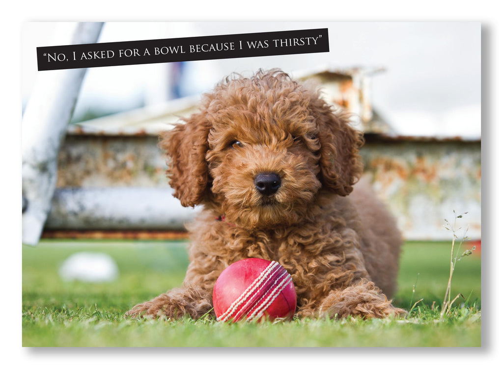 Cricket Greeting Card. Cute puppy with ball and funny caption