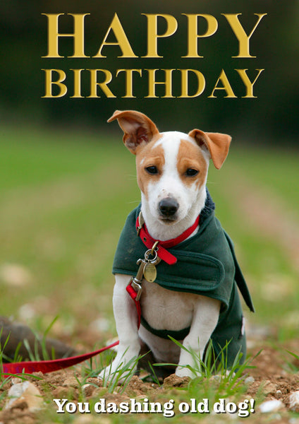 Jack Russell Terrier Birthday Card by Charles Sainsbury-Plaice