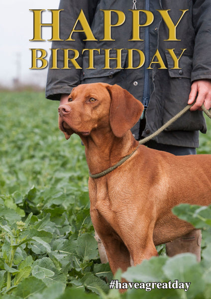 Vizsla dog Birthday Card by Charles Sainsbury-Plaice