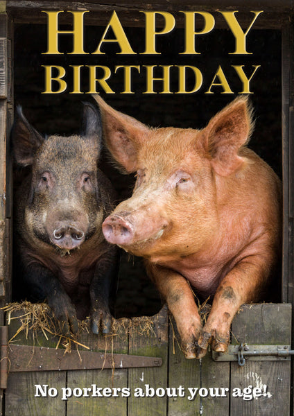 Pigs Birthday Card by Charles Sainsbury-Plaice