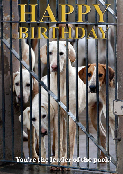 Foxhound Hunting Birthday Card by Charles Sainsbury-Plaice