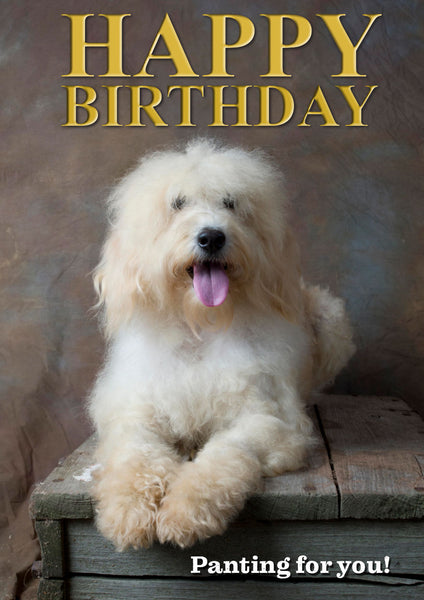 Labradoodle Birthday Card by Charles Sainsbury-Plaice